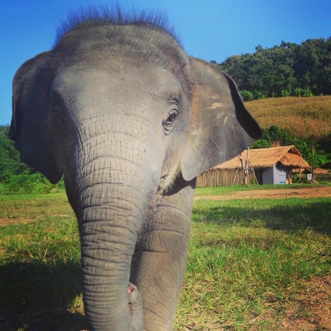 elephantchaingmai