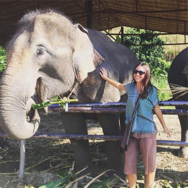 elephantchaingmai1
